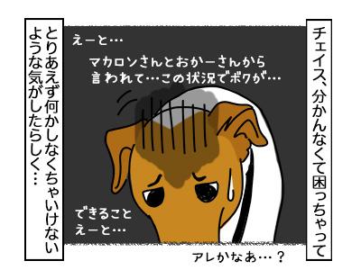 19022018_dog3mini.jpg