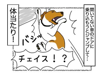 19022018_dog4mini.jpg
