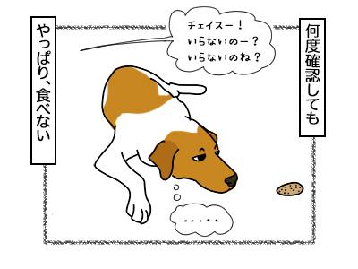 21022018_dog2.jpg