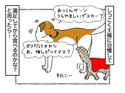 21022018_dog5.jpg