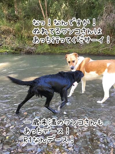 22012018_dog1.jpg