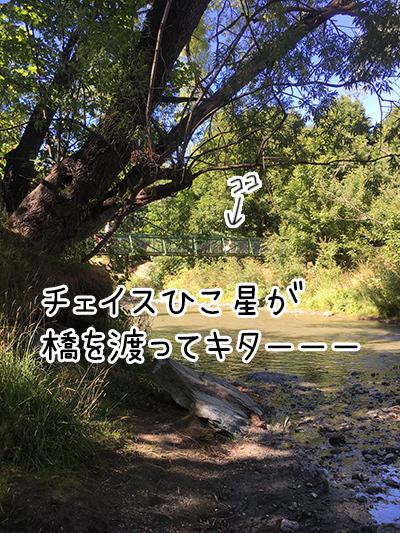 22012018_dog2.jpg