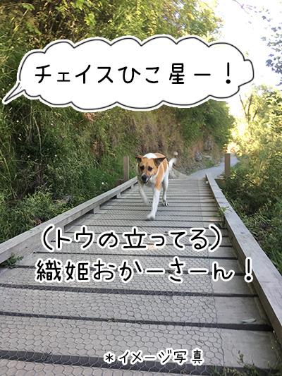 22012018_dog3.jpg