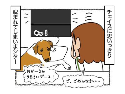 23022018_dog4.jpg