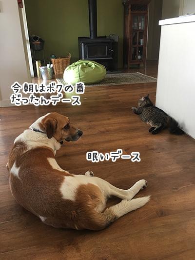24012018_dog4.jpg