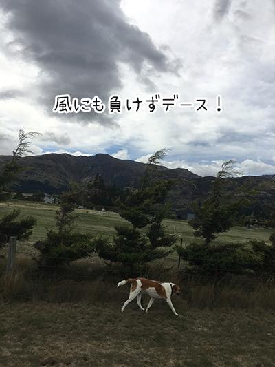 25022018_dog5.jpg