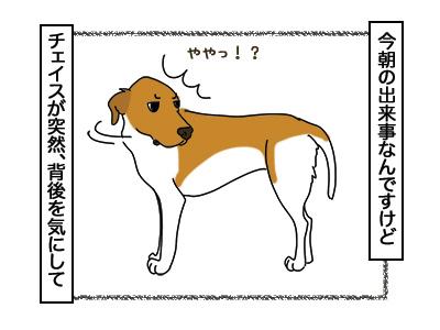 26022018_dog1.jpg