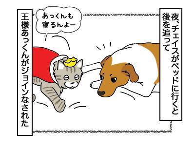 27022018_dog1.jpg