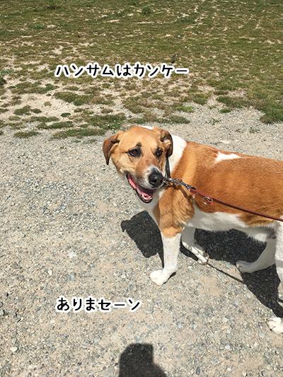 31122017_dog5.jpg