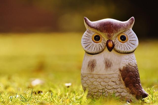 owl-1906495_640.jpg