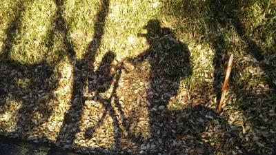 森林公園ワンコとサイクリング(キャバマル)