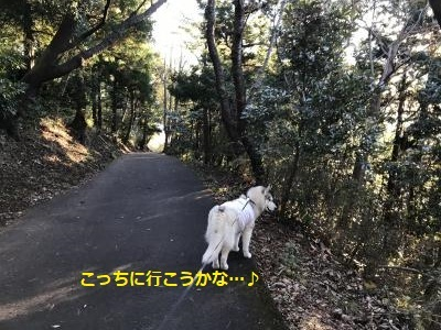 IMG_3174_convert_20180123222515.jpg
