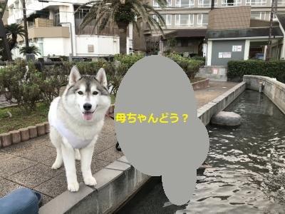 IMG_3268_convert_20180221211946.jpg