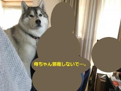 IMG_3431_convert_20180106143254.jpg