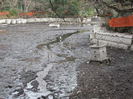 井の頭池かいぼり