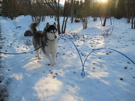 まだまだ雪散歩