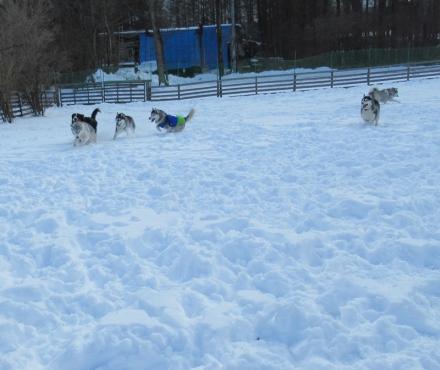 ワフで雪遊び