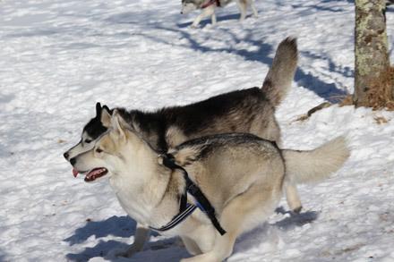 八ヶ岳自然文化園で雪遊び