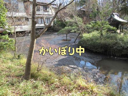 深大寺池のかいぼり