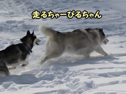 Woofには雪がいっぱい