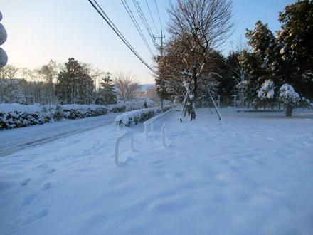 数年振りの大雪