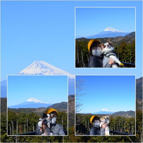 富士山きれいに見えました♪