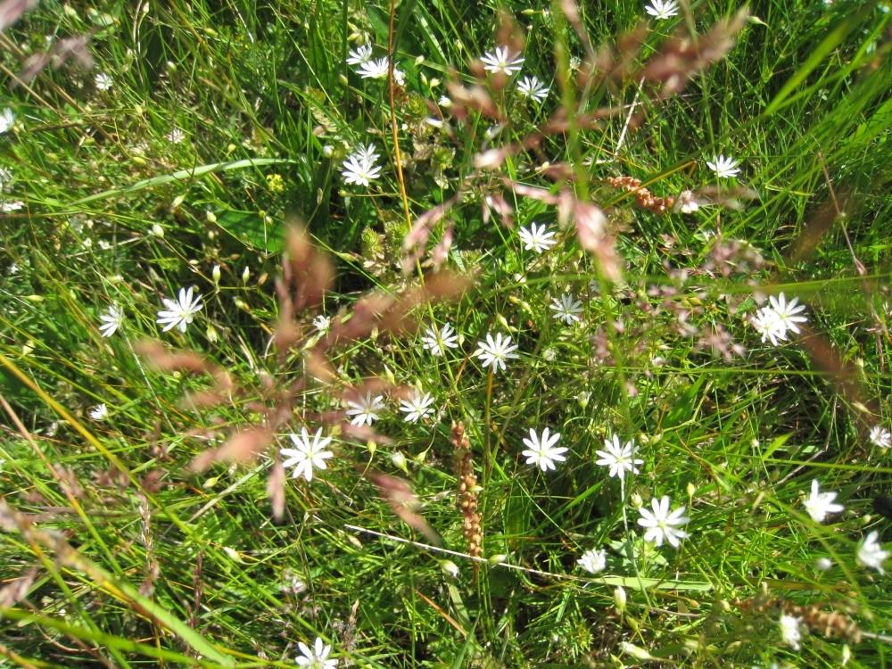 A-blom4.jpg