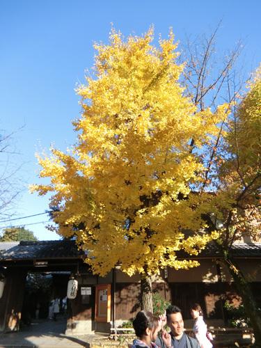 八坂神社、その5!