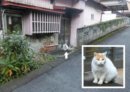 27日、ネコ発見。