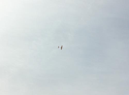 ばぁる、飛んでるトコ!その1。