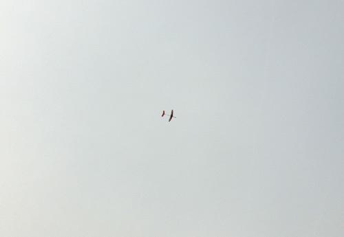 ナゾのピンク、飛んでるトコ!その1。