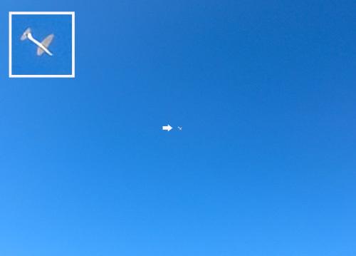 キュラムス、飛んでるトコ! その1。
