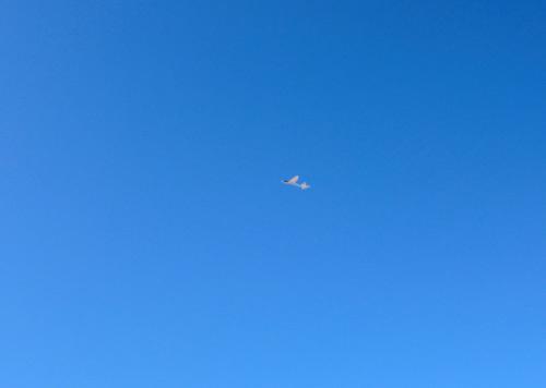 キュラムス、飛んでるトコ! その3。
