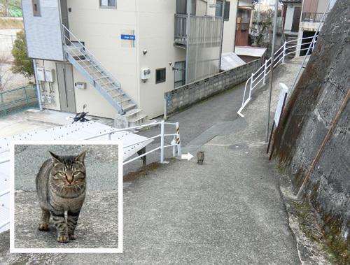 本日の、・・・猫はっけん!