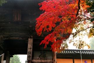 171108saimyoji-jingoji-(11).jpg