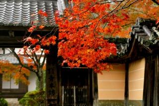 171108saimyoji-jingoji-(14).jpg