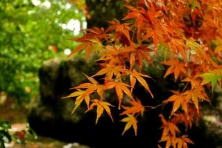 171108saimyoji-jingoji-(29).jpg