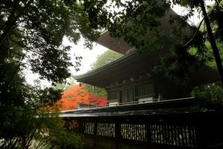 171108saimyoji-jingoji-(30).jpg