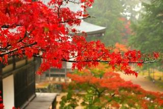 171108saimyoji-jingoji-(36).jpg