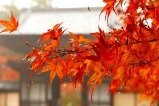 171108saimyoji-jingoji-(49).jpg