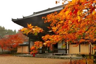 171108saimyoji-jingoji-(51).jpg