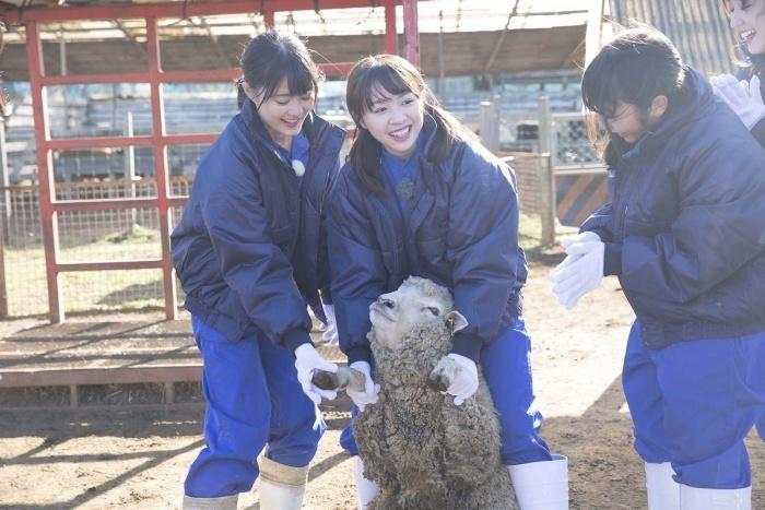 乃木坂46のガクたび! 動物専門学校3