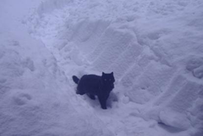 雪とおはぎ2