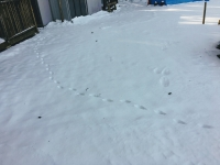 いもりの里_動物の足跡