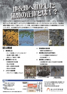 地衣類 藻類と共生した菌類たち-2