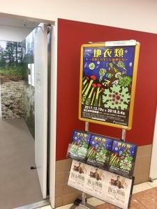 地衣類 藻類と共生した菌類たち-3