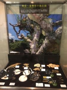 地衣類 藻類と共生した菌類たち-5