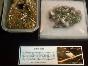 地衣類 藻類と共生した菌類たち-8