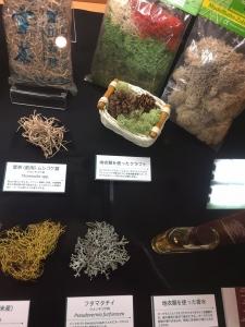 地衣類 藻類と共生した菌類たち-10