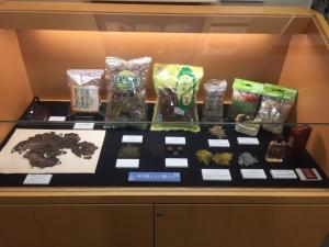 地衣類 藻類と共生した菌類たち-9